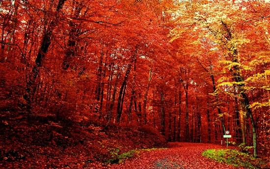 比北京香山红叶风景区大180余倍